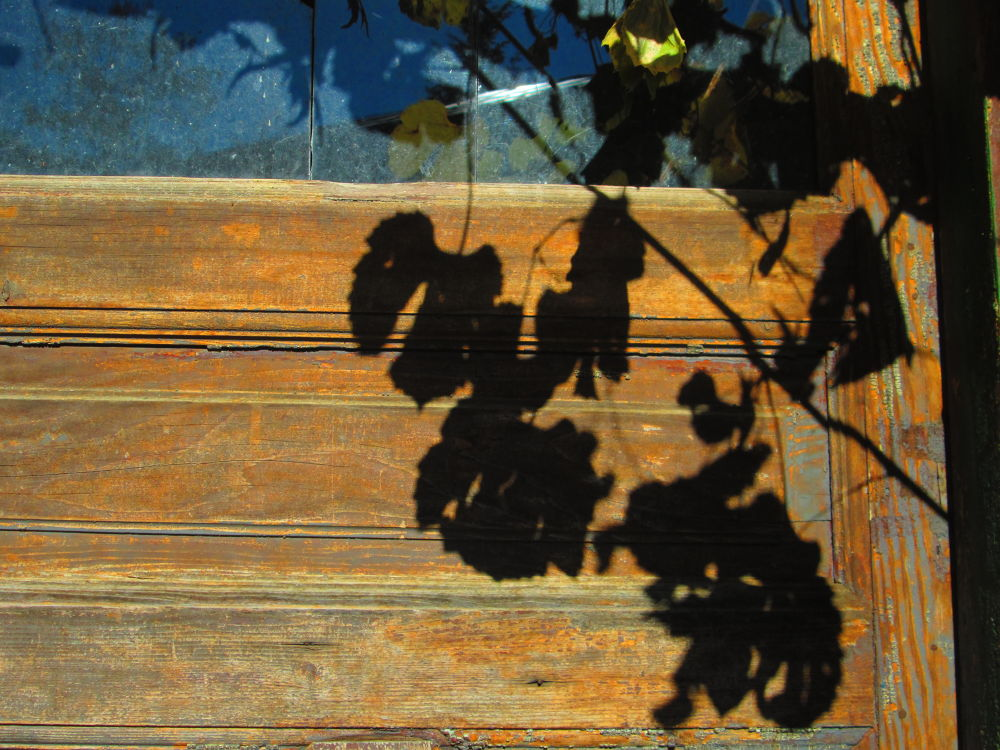Shadow  by Gratiela