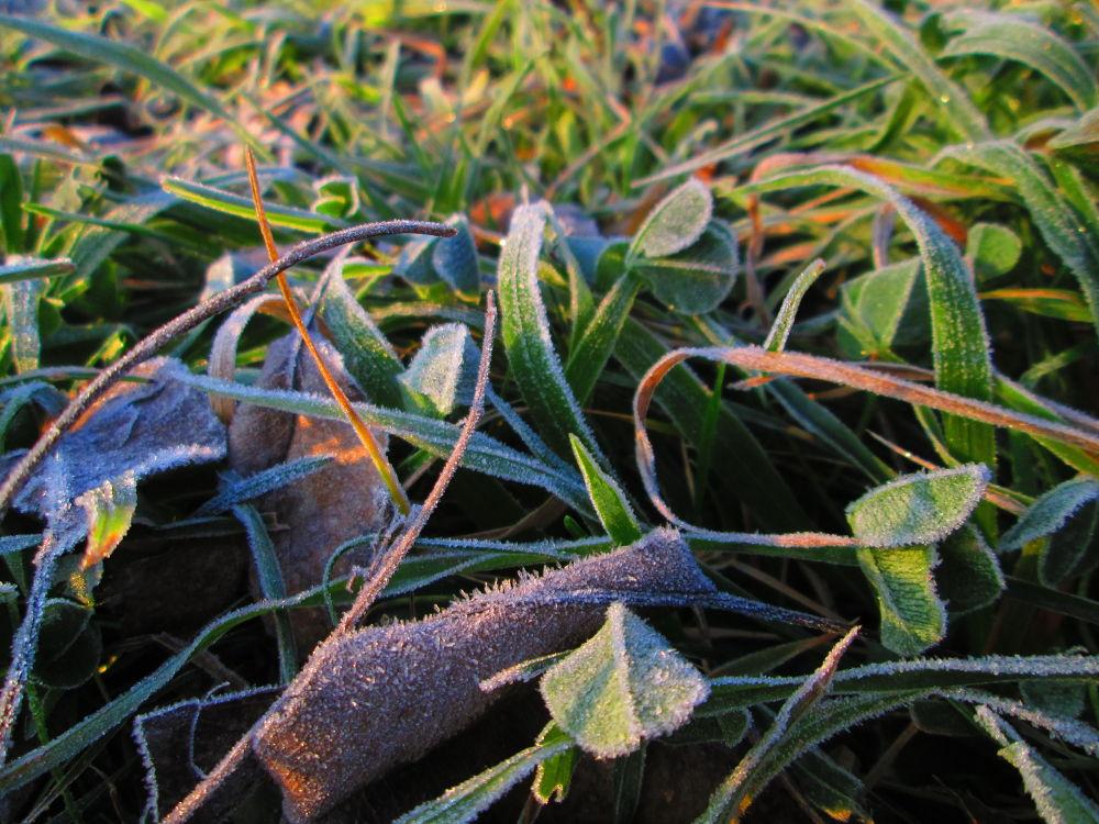 November Frost  by Gratiela