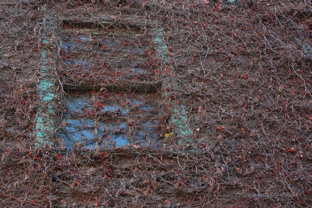 Tangled window. by Bruno Rademacher Photography