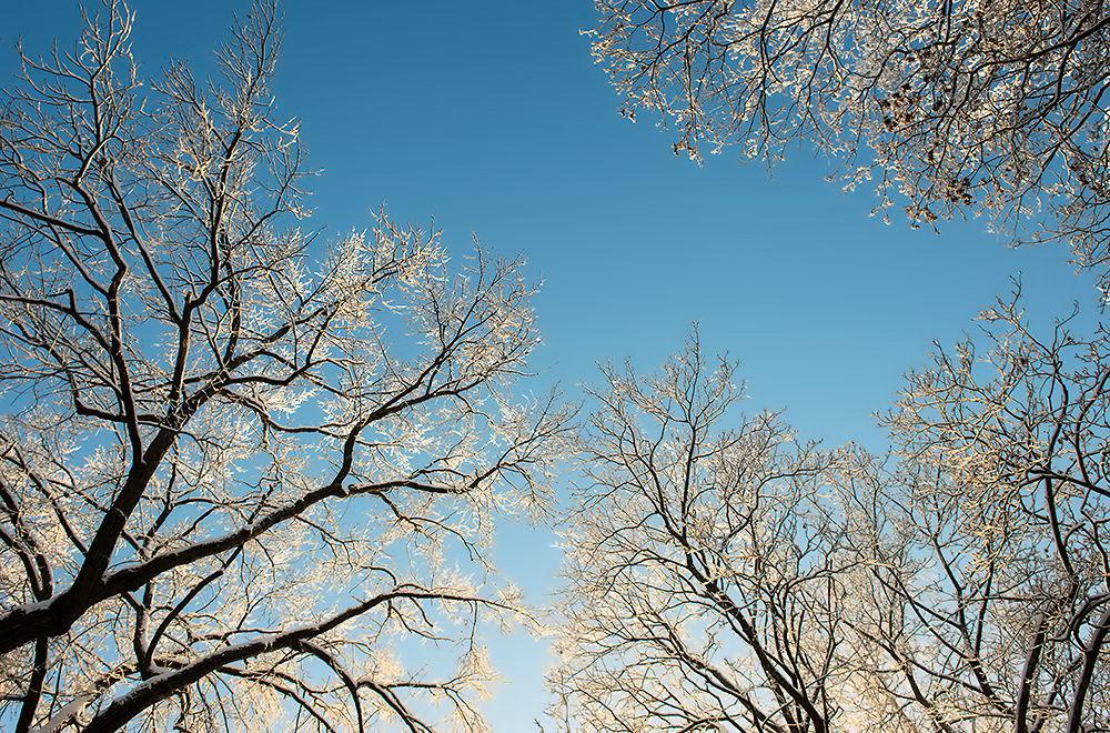 Photo in Landscape #sky #winter #trees