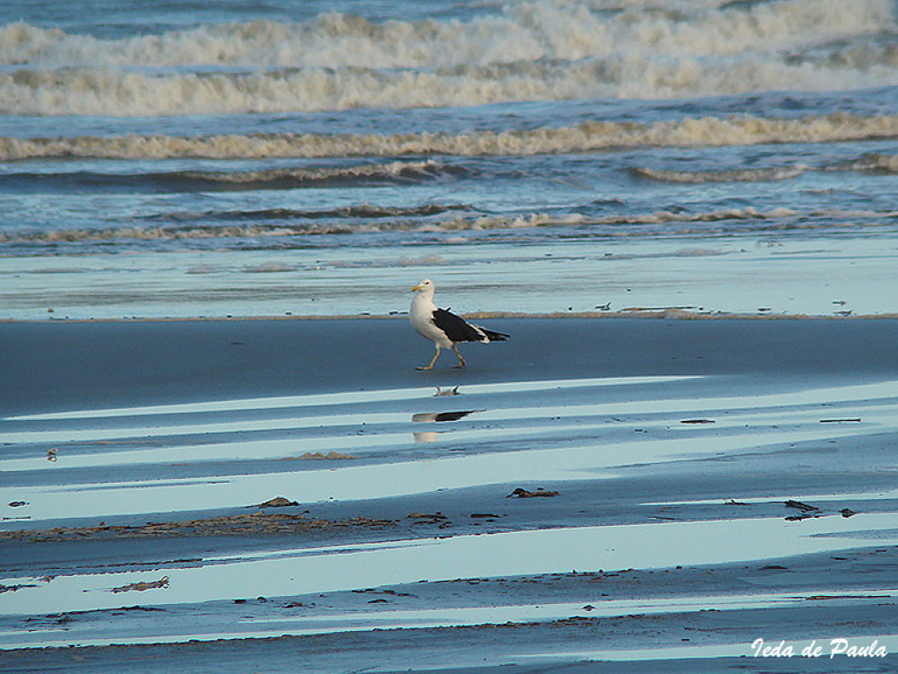 Photo in Sea and Sand #beach #seagull