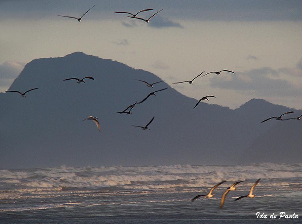 Sea and Birds by iedadepaula5