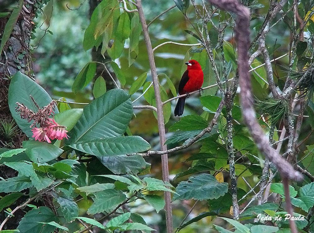 special bird by iedadepaula5