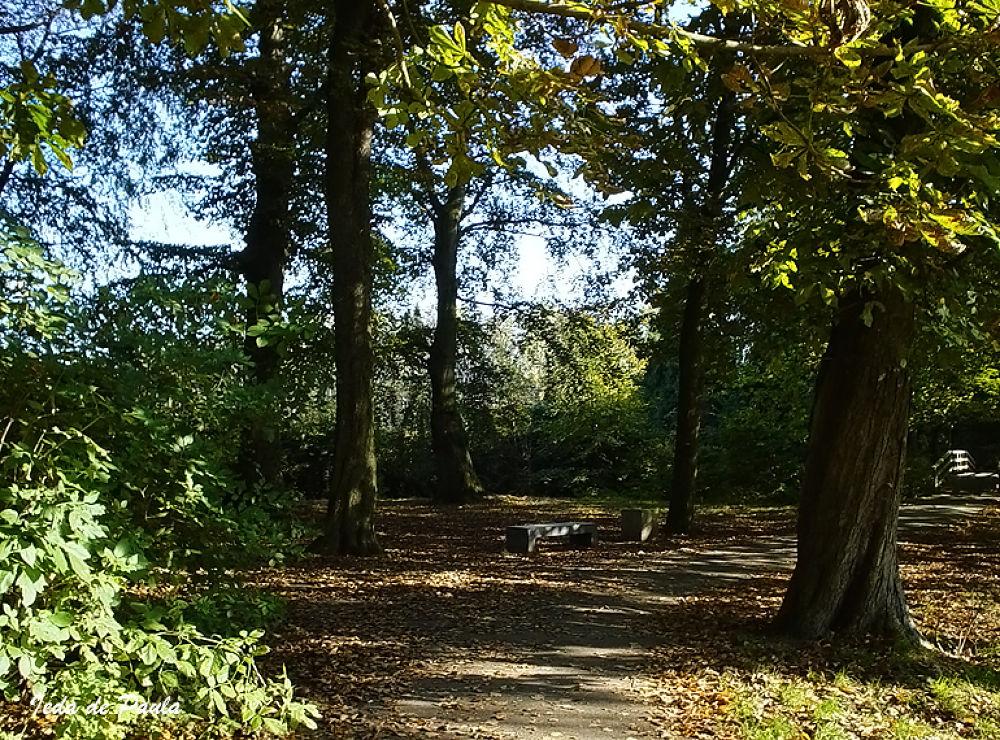 Autumn in Holland by iedadepaula5