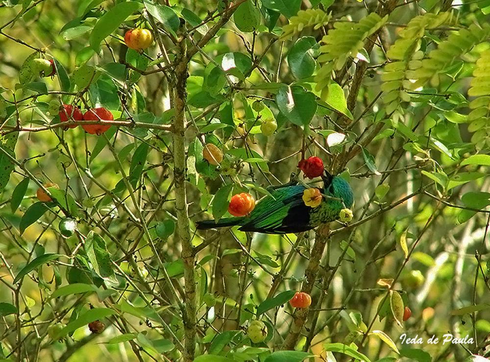 Photo in Random #birds #nature #fruit