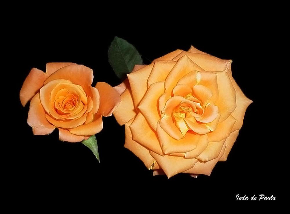 orange roses by iedadepaula5