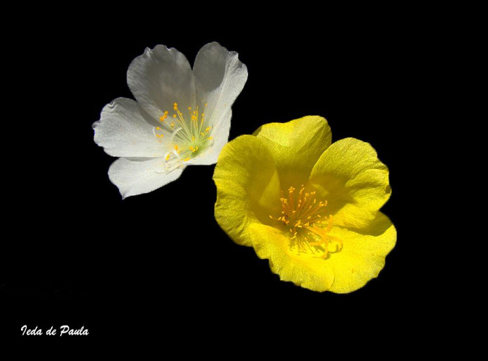 wildflower by iedadepaula5