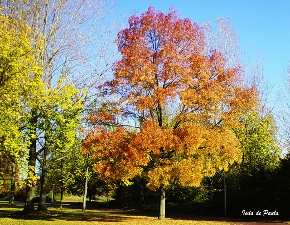 trees in autumn by iedadepaula5