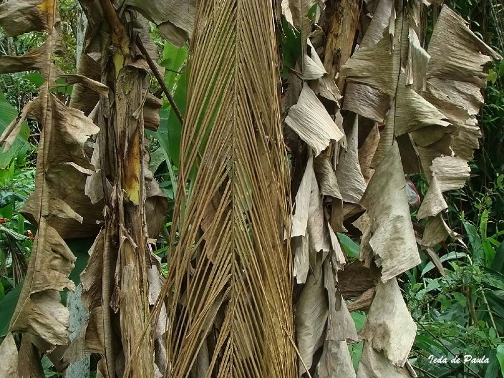 the beauty of dead leaves by iedadepaula5