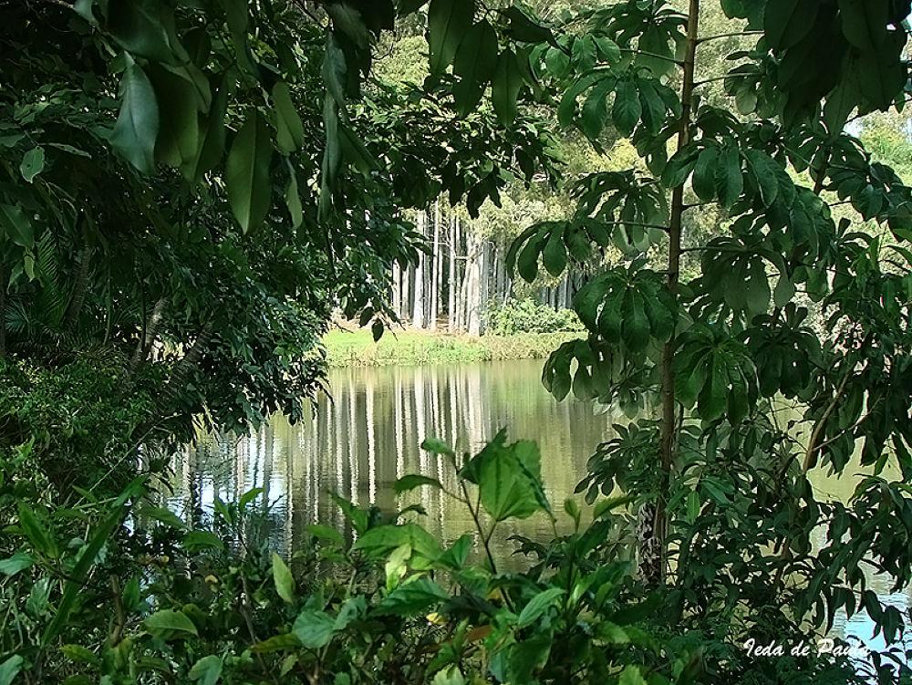 lake and light by iedadepaula5