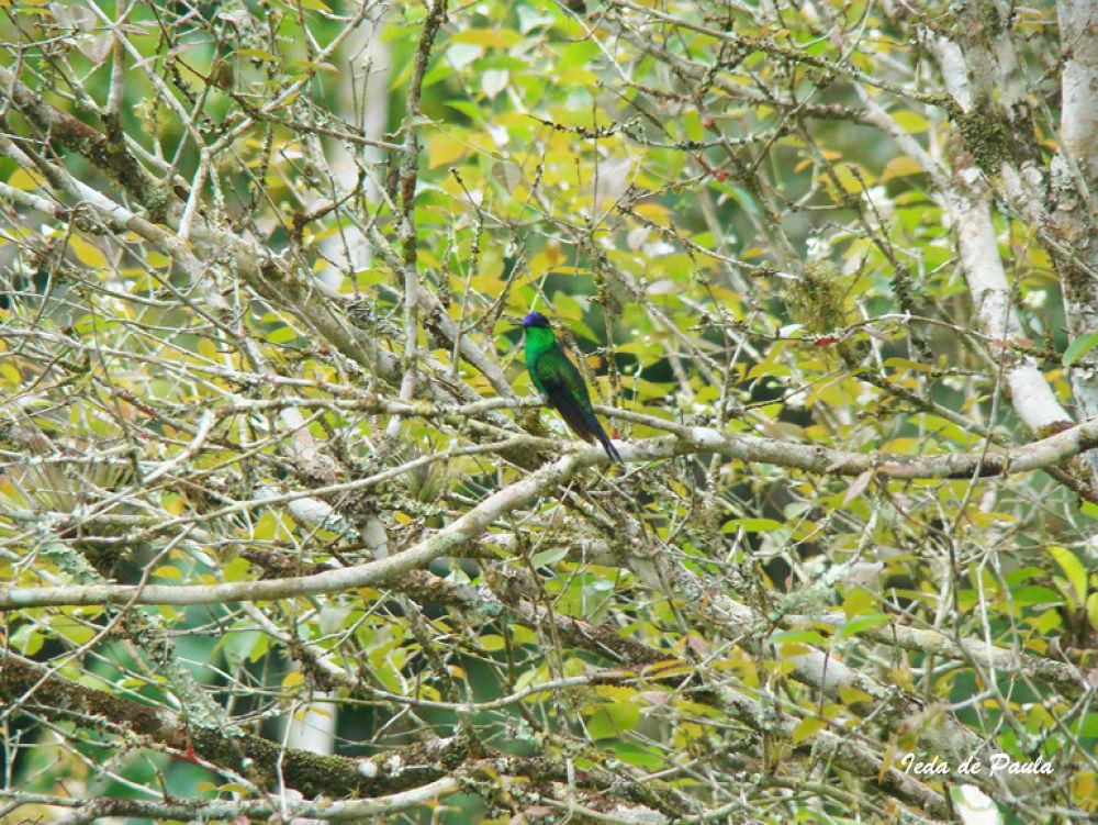 Bird VI by iedadepaula5
