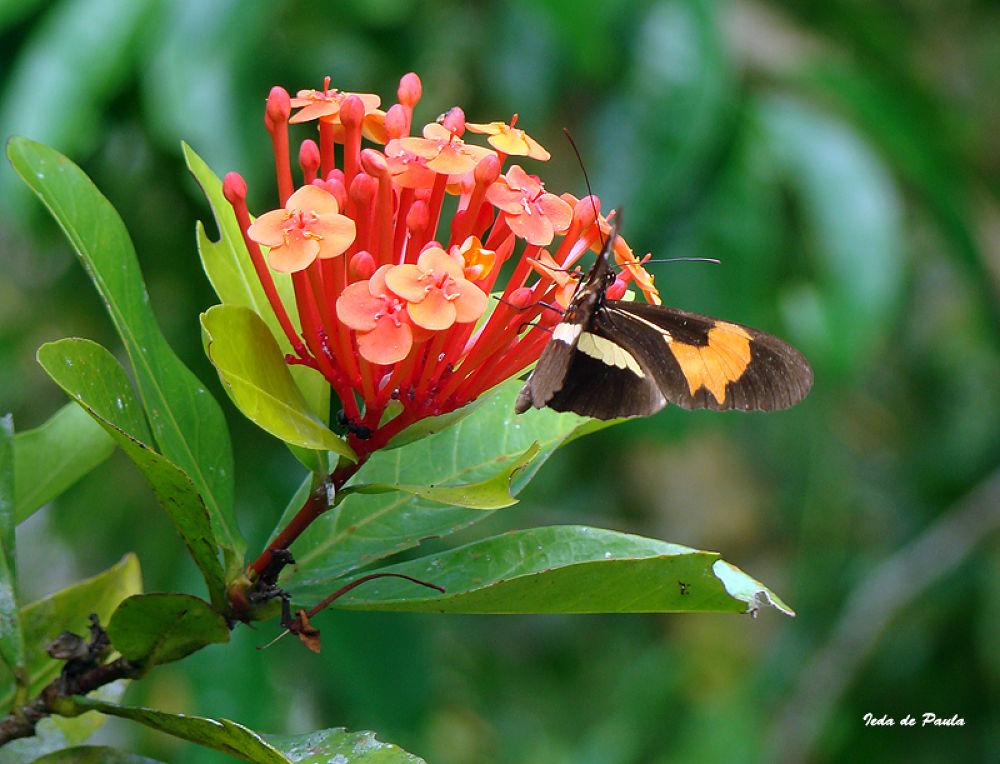butterfly II by iedadepaula5