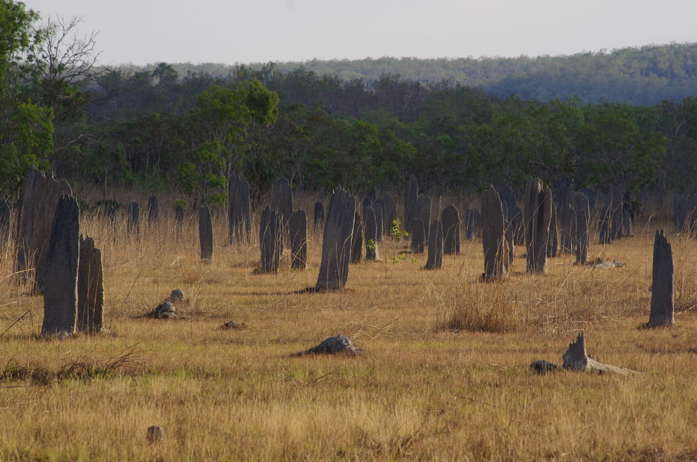 Photo in Landscape #northern territory #magnetic termite mounds #australia