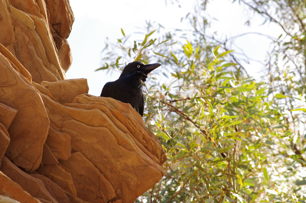 Crow Perch by katherineannpotter