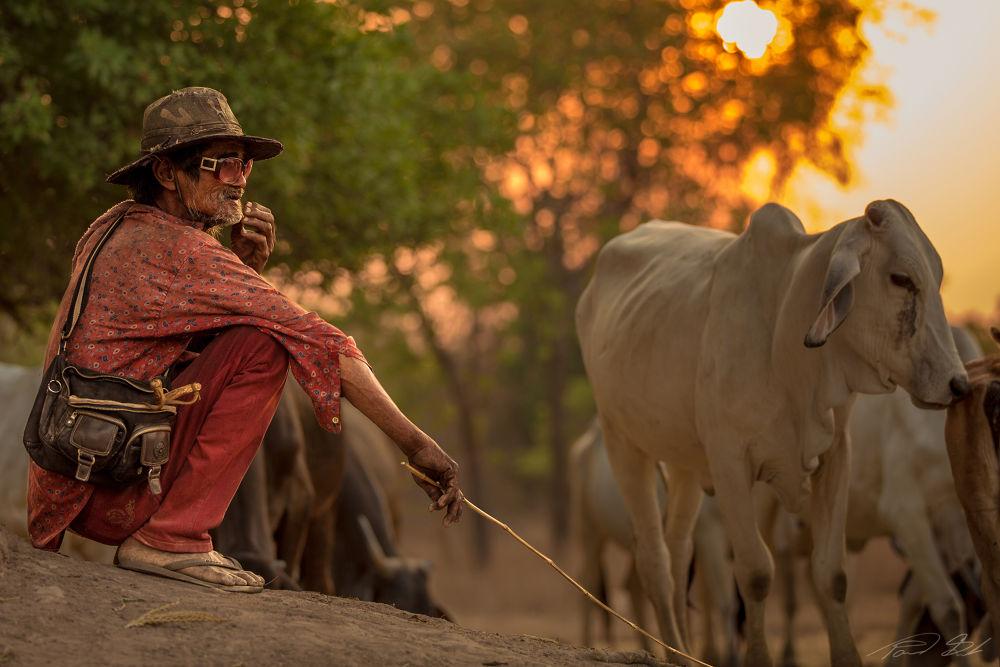 cowboy by singha103
