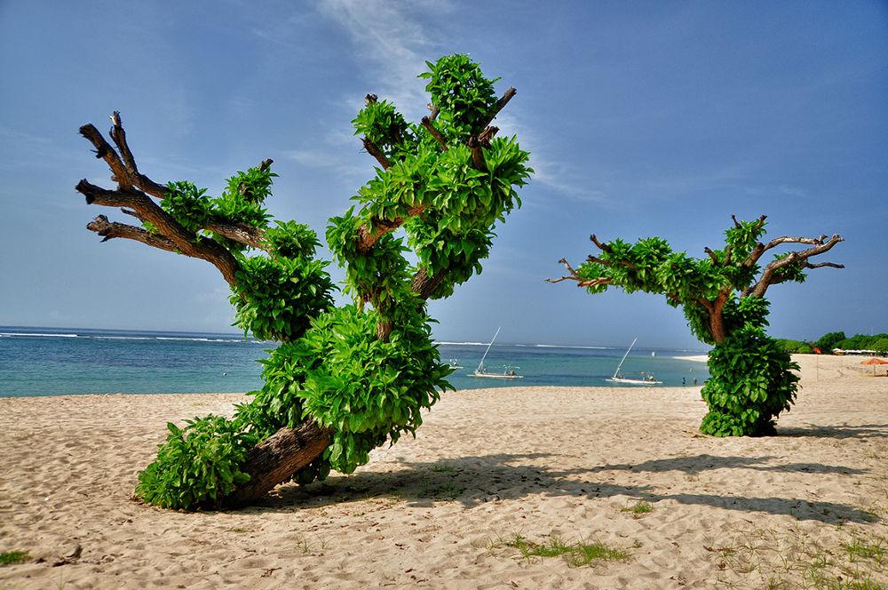 Dancing trees by nurdinrivai
