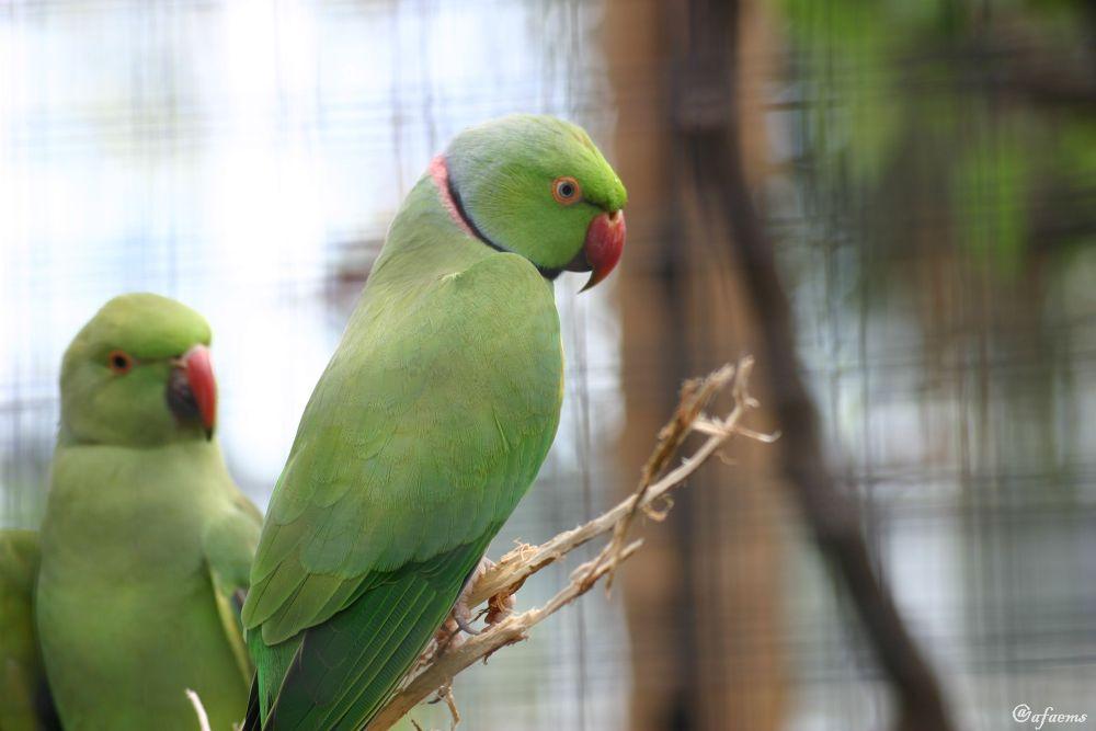 A beautiful bird by Armin Faems