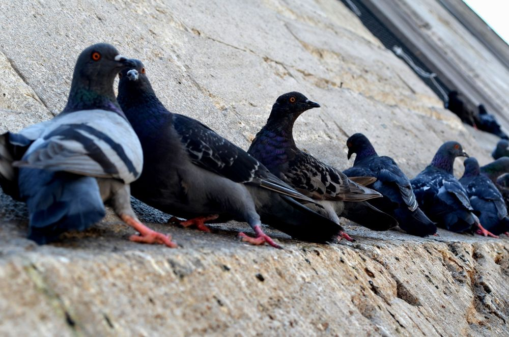 Birds.. by nlninanc
