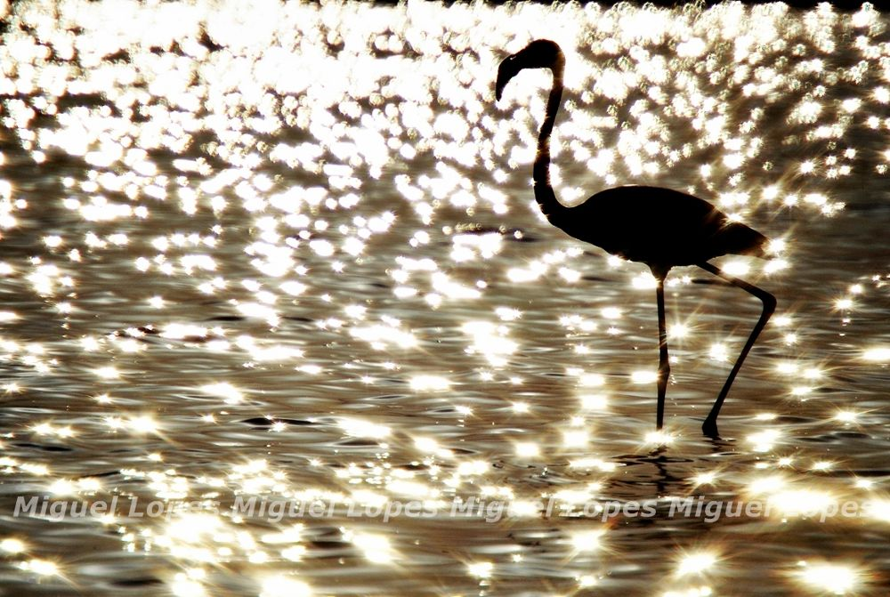 Photo in Nature #flamingo ave pasaro bird