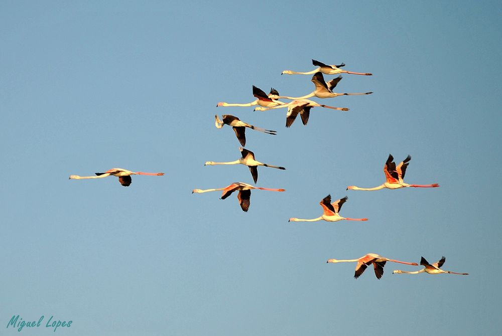 Flamingos by michaellopeslopes