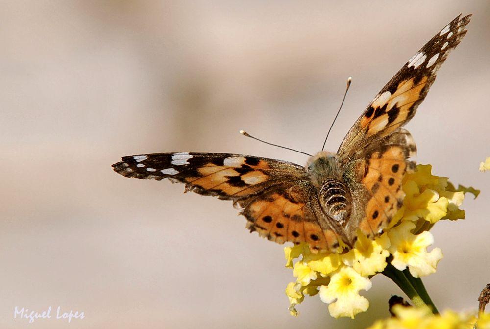 Photo in Nature #natura