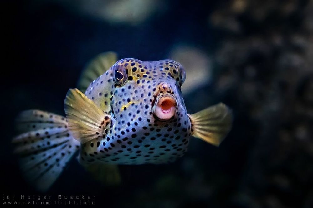 Photo in Animal #fish #sealife #underwater #bupix