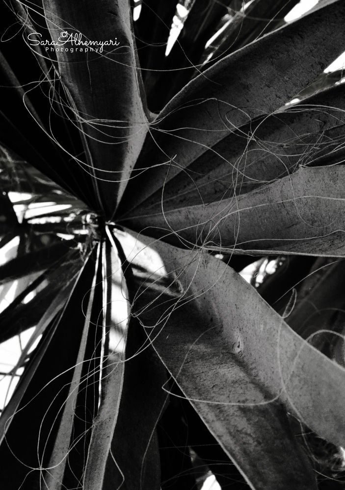 `Date palm leaves ♕ by Şαяα αl