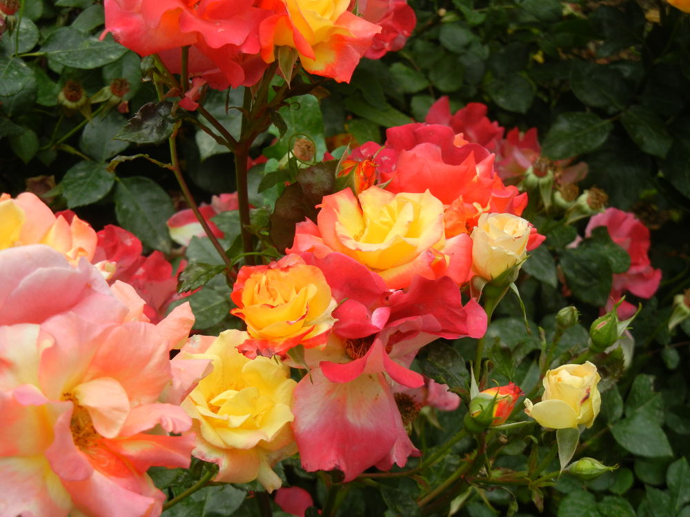 So Beauty Soft Flowers by DaNi Ibra