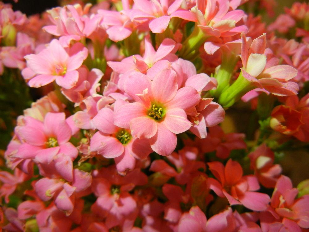 Flowers In Pink by DaNi Ibra