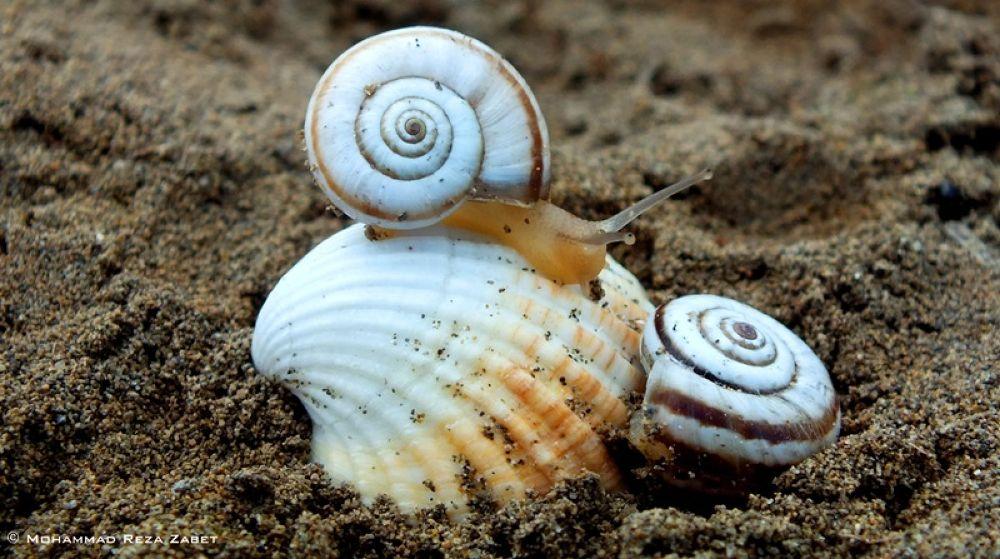Ring & Snail by Mohammad Reza Zabet