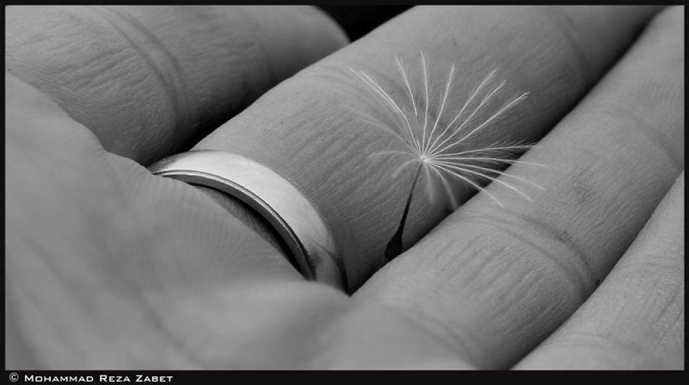 Ring & Dandelion by Mohammad Reza Zabet