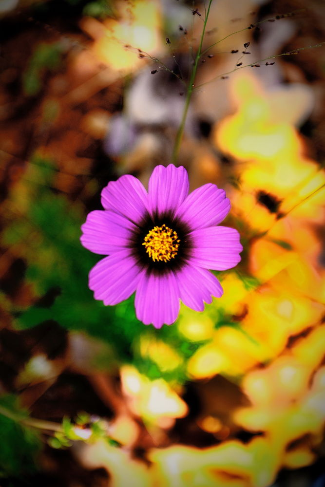 Cosmos. by StyxLee