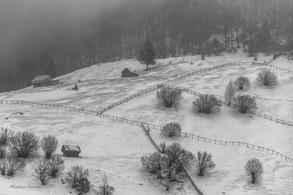 winter scene by Mirela Savu