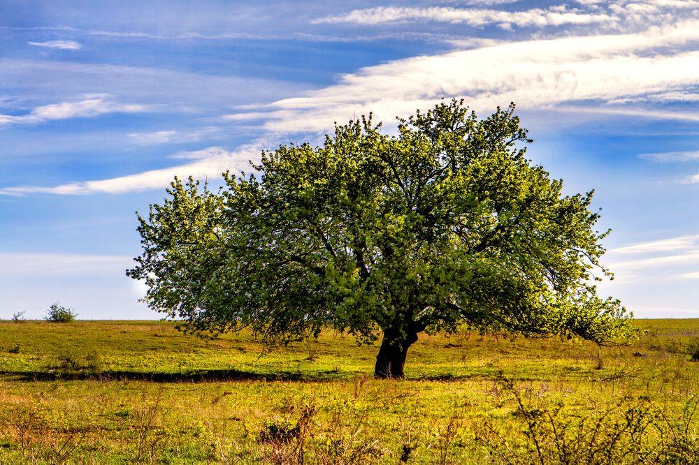 The tree by Mirela Savu