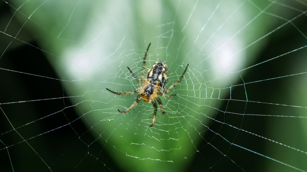 Spider web by Paolo K5