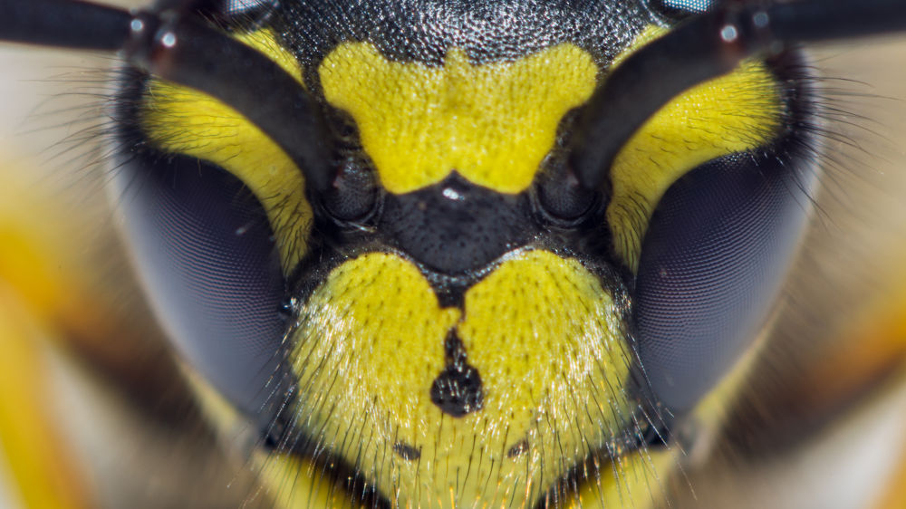 Eyes of a yellow jacket by Paolo K5