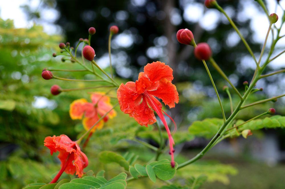My Flower by Jukhie Damak