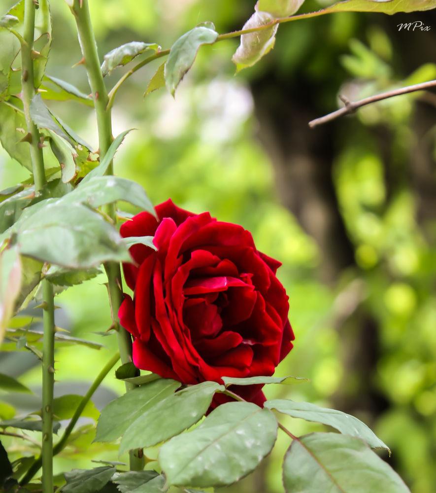The Beautiful Red !! by Munish Kr. Kaundal