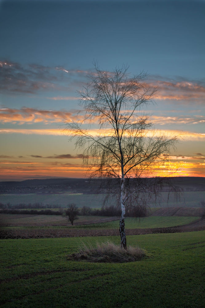 Photo in Landscape #tree #sunset #clouds #field #sky