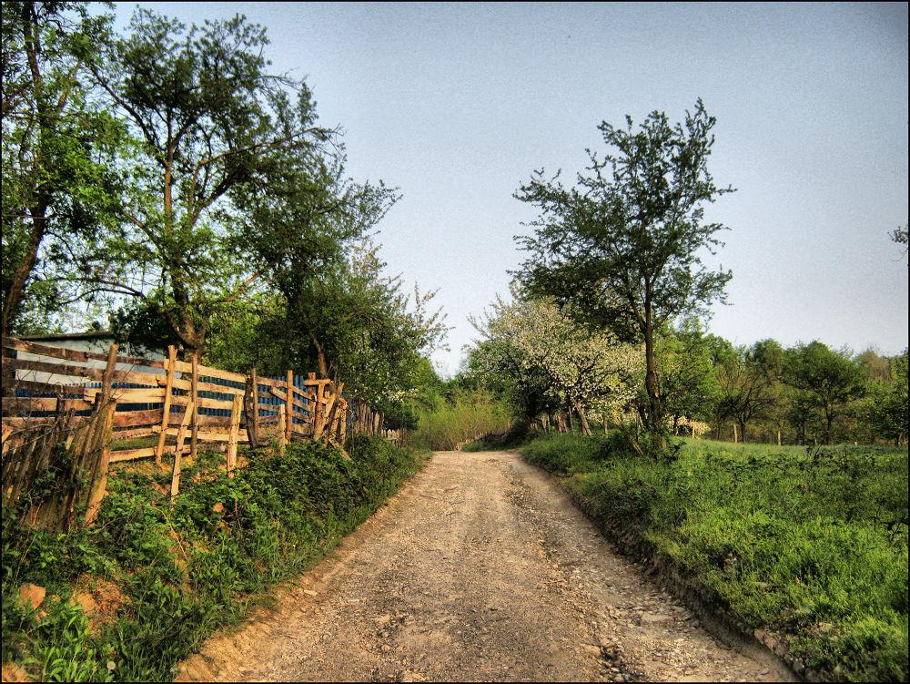 Landscape  by ivanatrifkovic