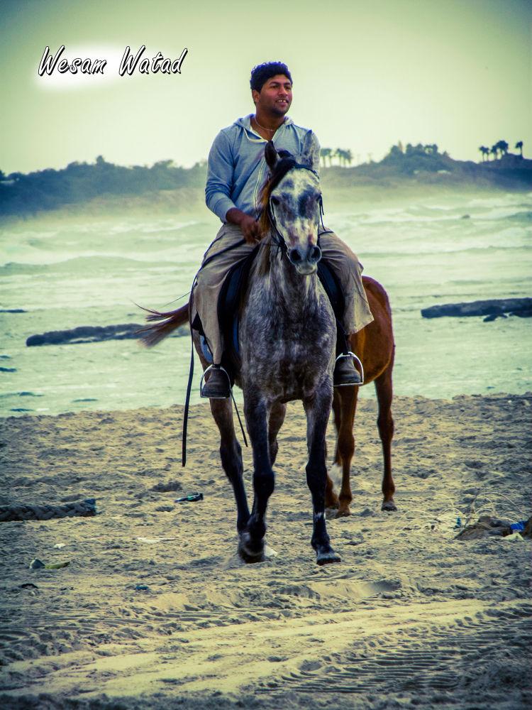 Horse by Wesam Watadd
