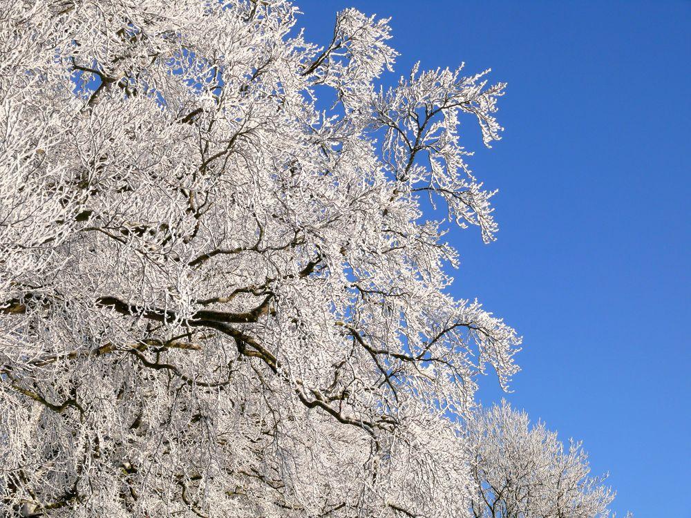 Winter  by Brandal
