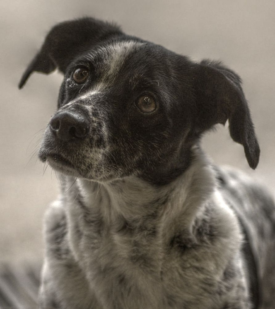 Dog by AKphotopro
