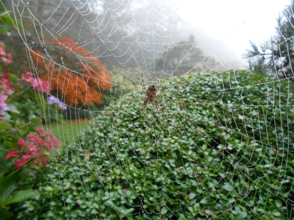 A Beautiful Web  by Michelle Justice