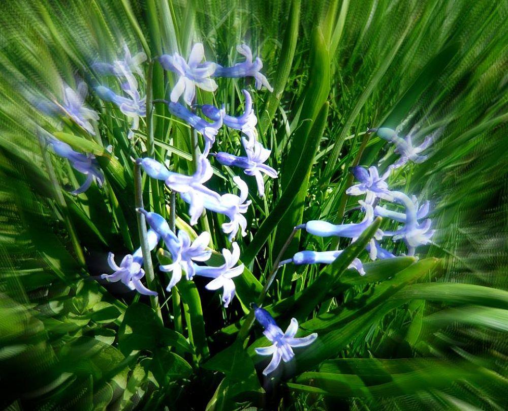Zyumbyulat sweet blue serenity! by yoneka8