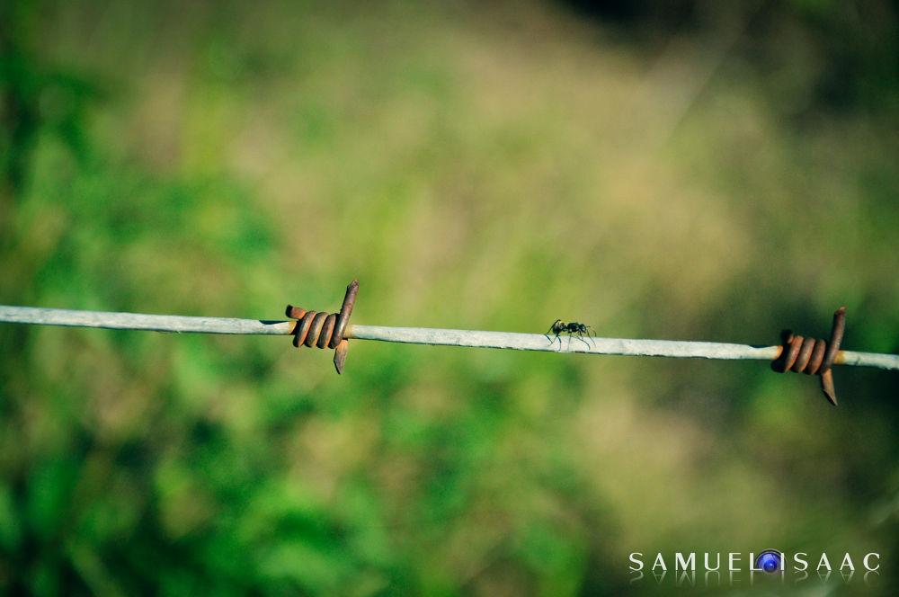 DSC_0028 by SamuelIsaacSalganLazarte