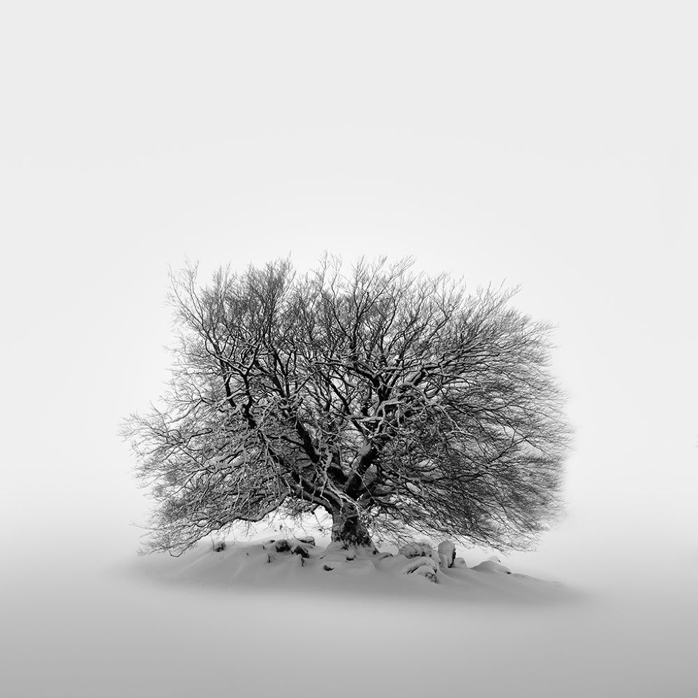 A tree will never forget by Miguel Cabezas
