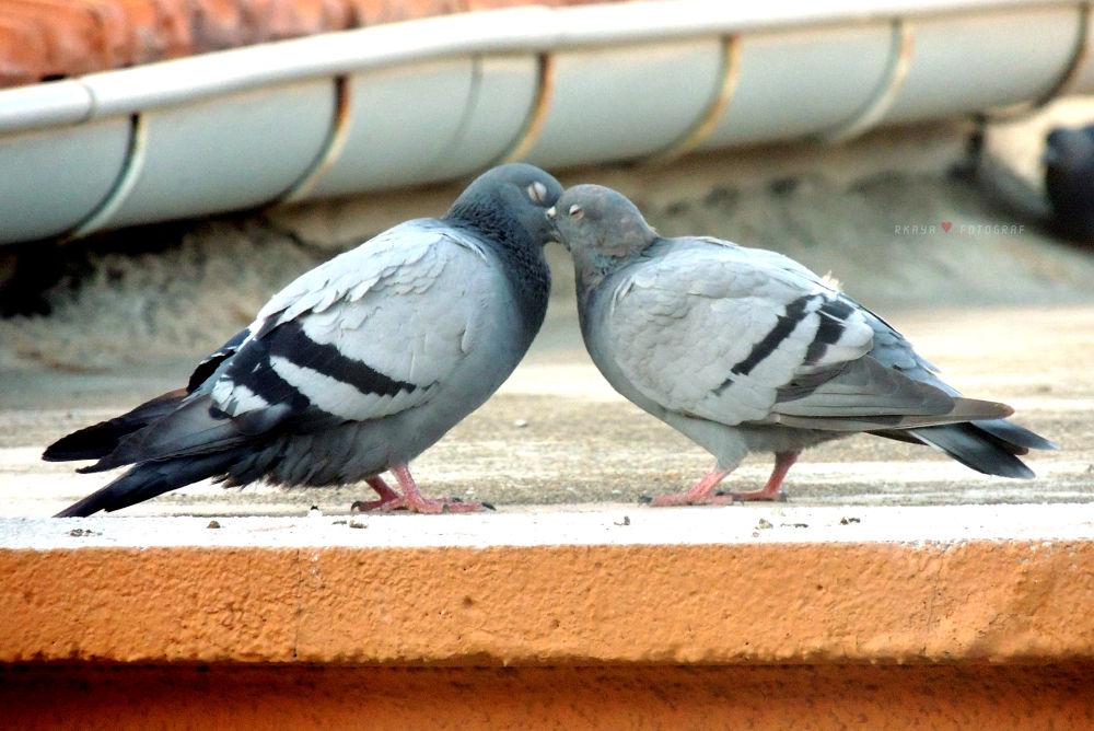 Aşk ♥ Love...   by Ramazan Kaya