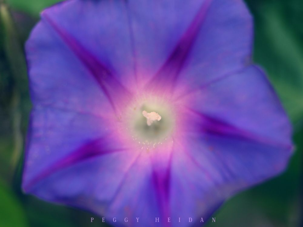 Photo in Macro #macro #close up #flower #garden #nature #blossom #violet