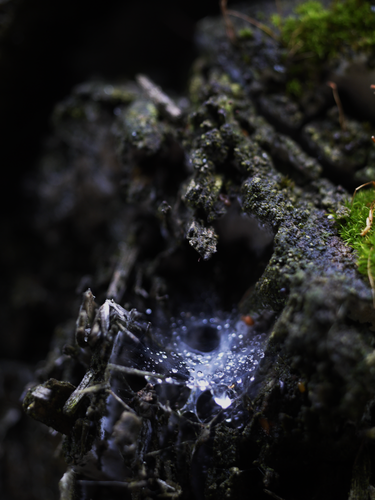 spider's cave by Peggy Heidan